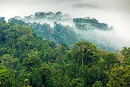 Produkt Dschungel Wasserfilter