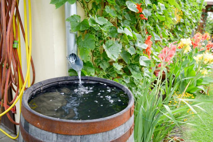 Regenwasser Sammeln Sinnvoll Nutzen Testbewertungen
